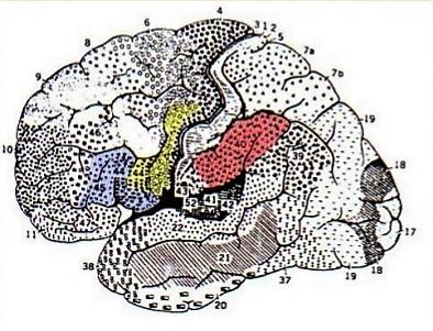 neuroni-specchio-2-7-638.jpg